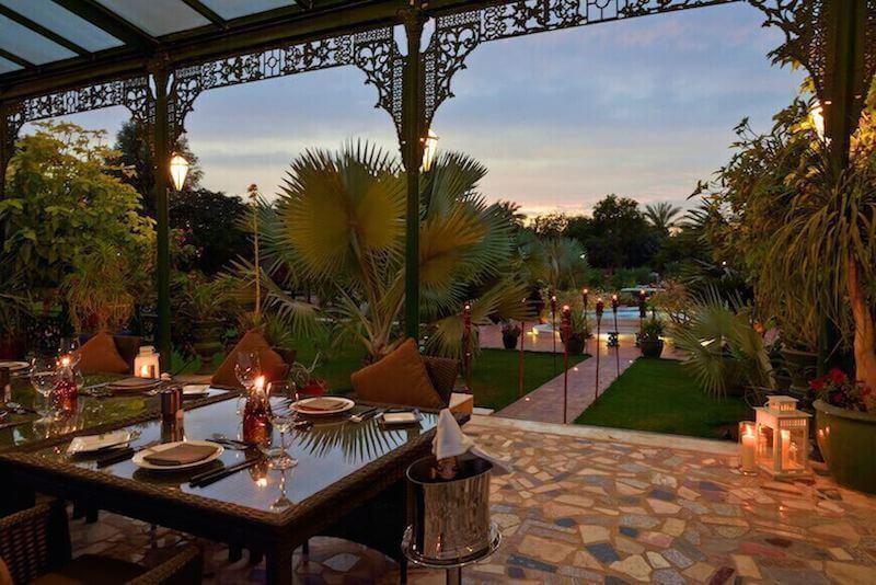 Rare Desert Palm Dubai